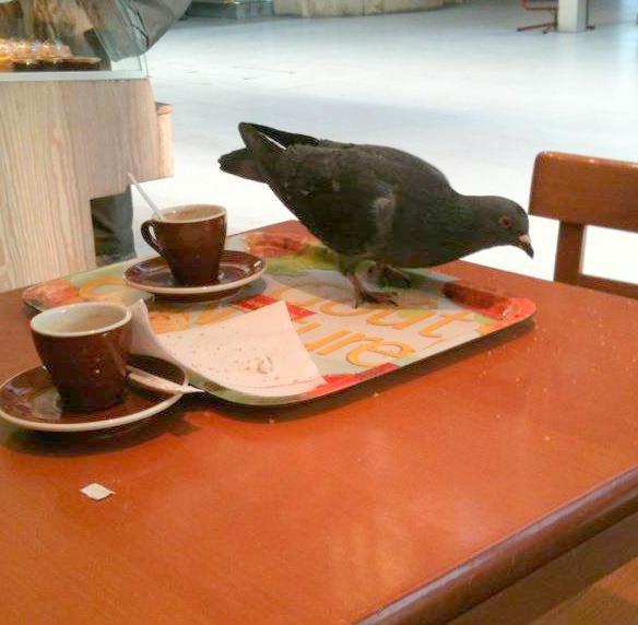 Google Pigeon : le nouvel algorithme pour les recherches locales.